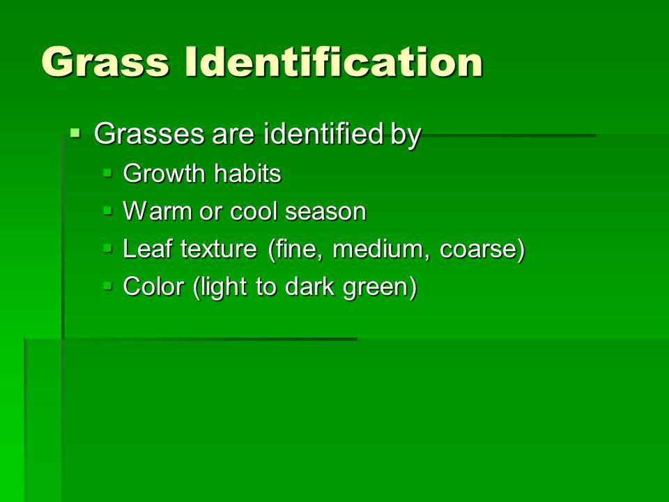 Grass Identification Grasses are identified by Growth habits