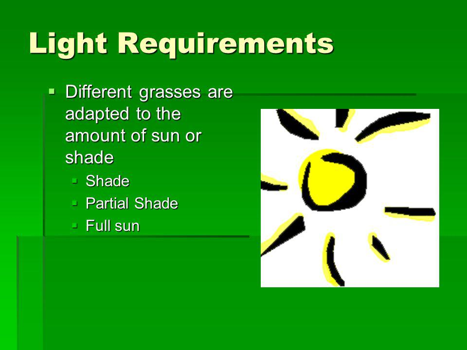 Light Requirements Different grasses are adapted to the amount of sun or shade. Shade. Partial Shade.