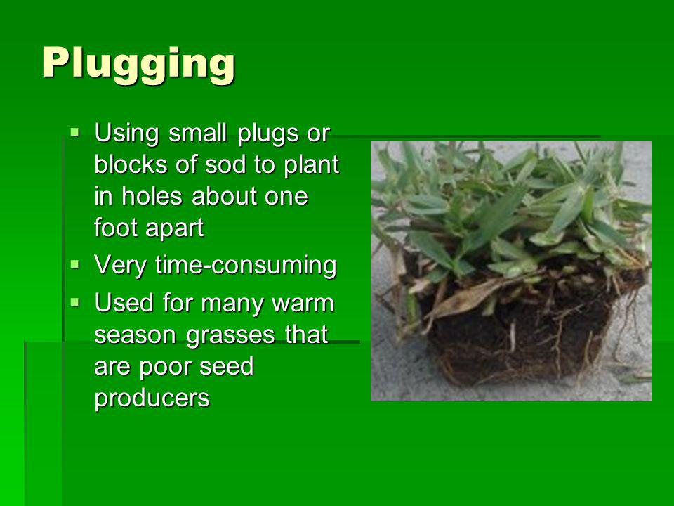 Plugging Using small plugs or blocks of sod to plant in holes about one foot apart. Very time-consuming.