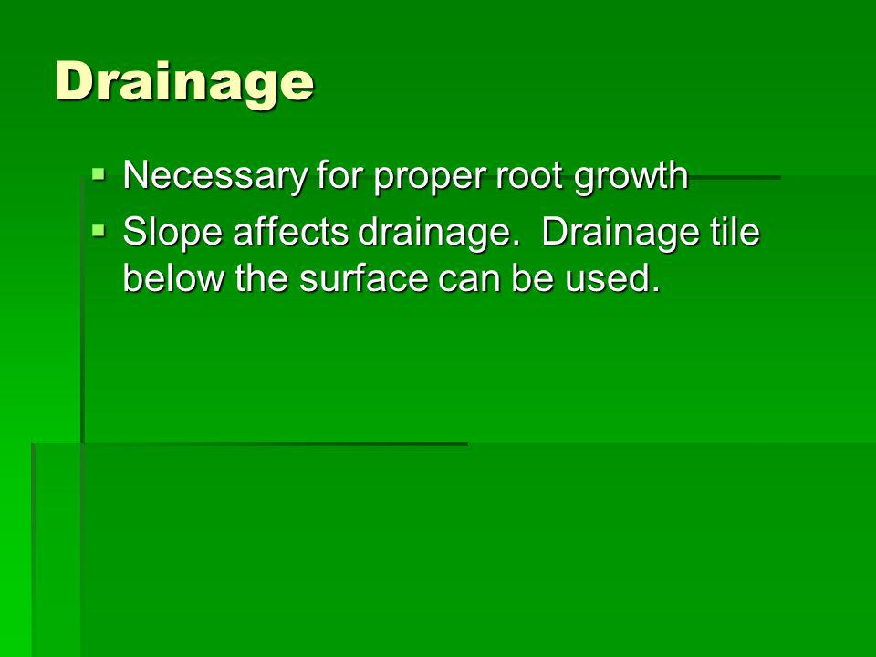Drainage Necessary for proper root growth