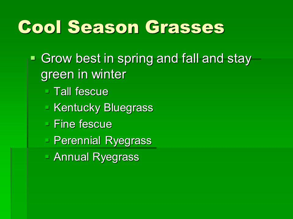 Cool Season Grasses Grow best in spring and fall and stay green in winter. Tall fescue. Kentucky Bluegrass.