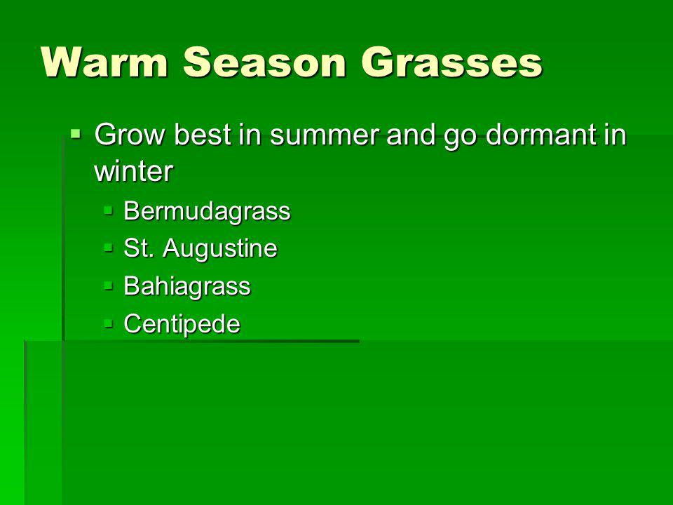 Warm Season Grasses Grow best in summer and go dormant in winter