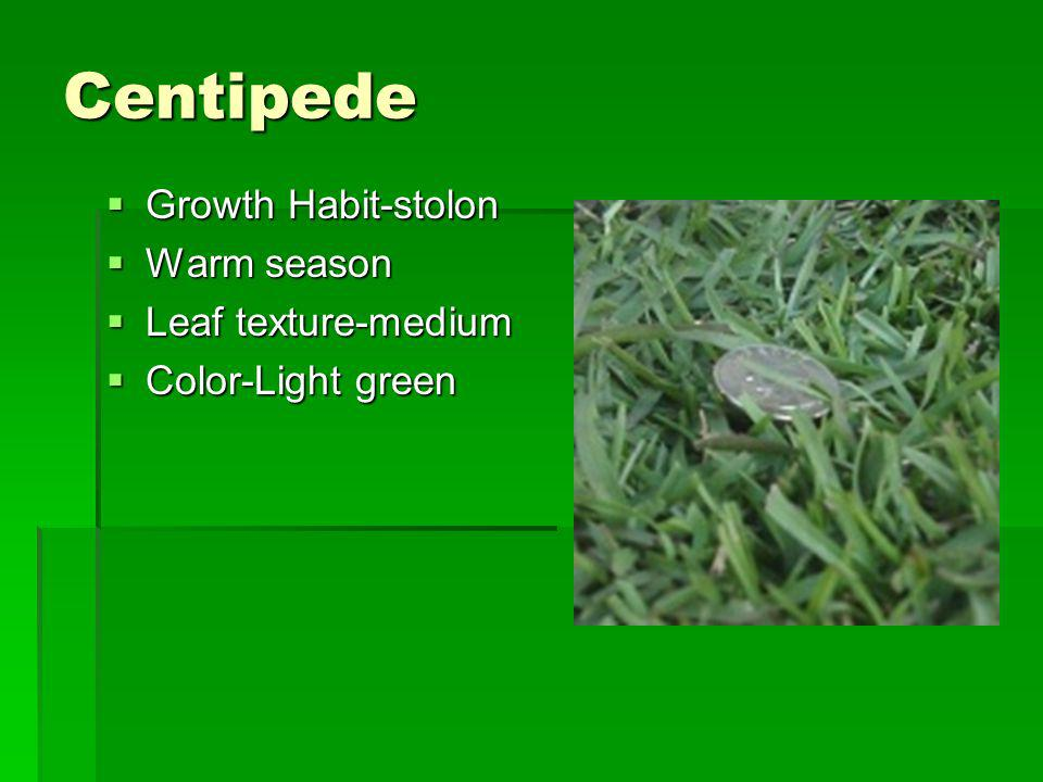 Centipede Growth Habit-stolon Warm season Leaf texture-medium