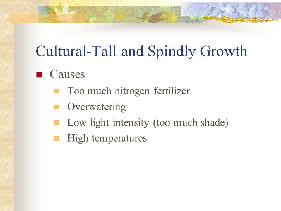 Cultural-Tall and Spindly Growth