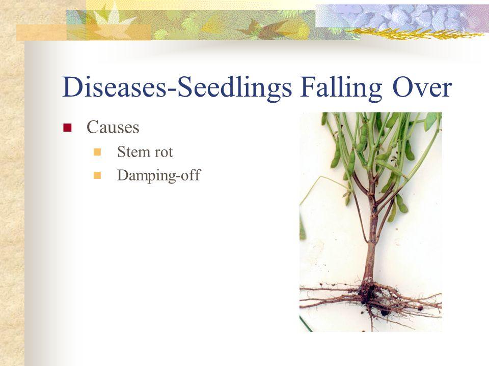Diseases-Seedlings Falling Over