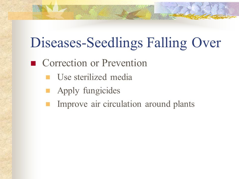 Diseases-Seedlings Falling Over