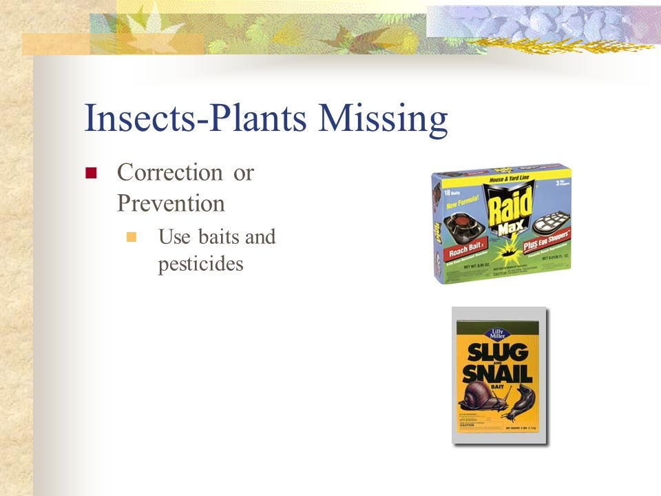Insects-Plants Missing