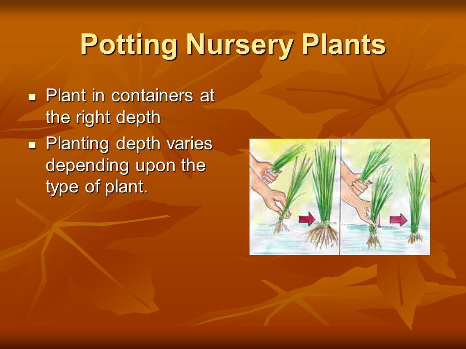 Potting Nursery Plants