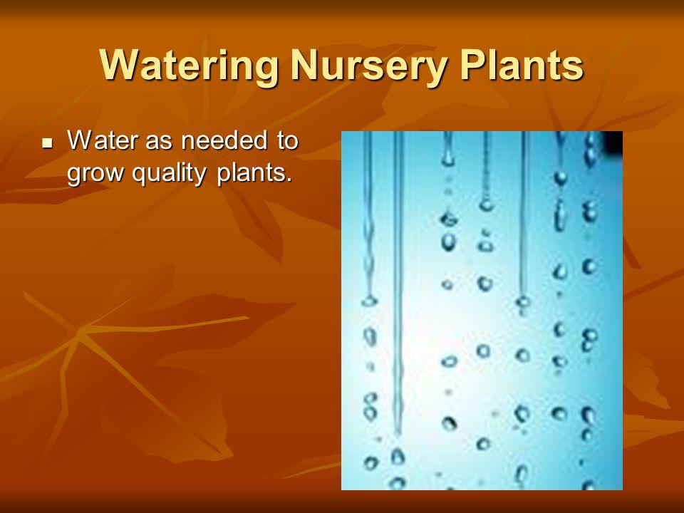 Watering Nursery Plants
