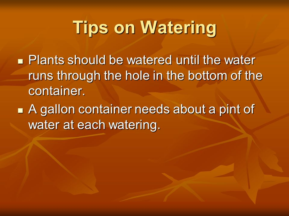 Tips on WateringPlants should be watered until the water runs through the hole in the bottom of the container.