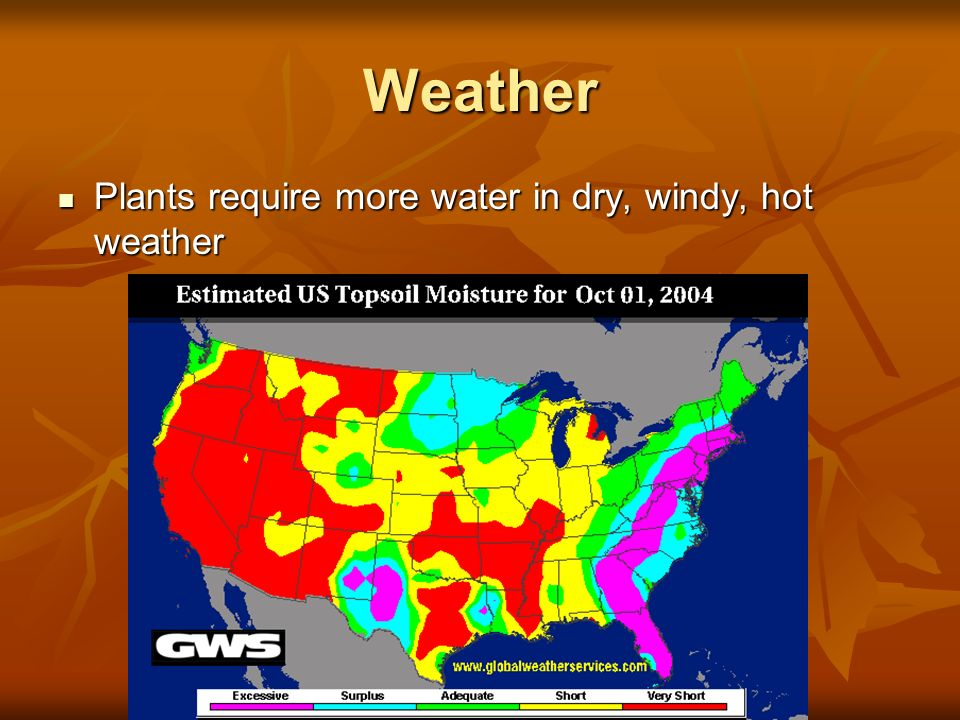 Weather Plants require more water in dry, windy, hot weather