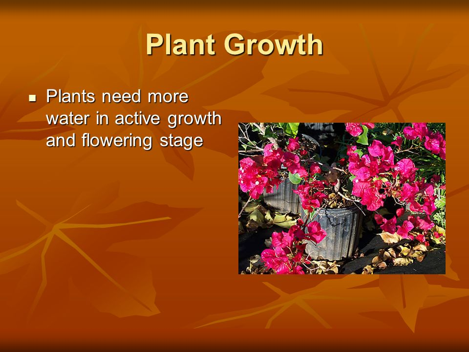 Plant Growth Plants need more water in active growth and flowering stage