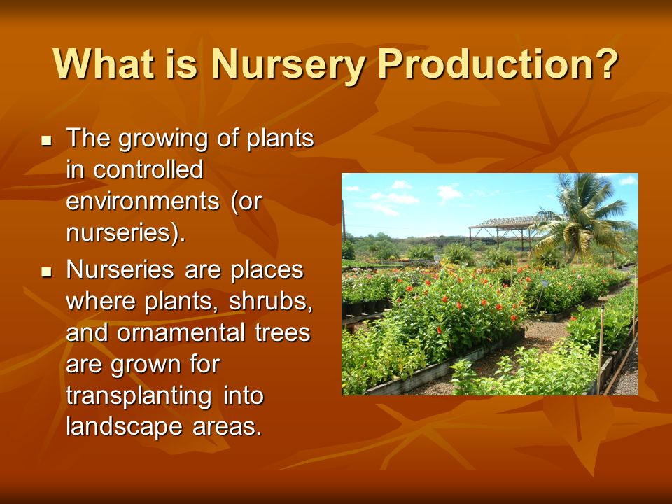 What is Nursery Production