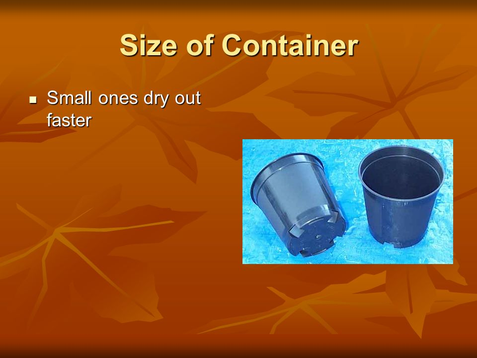 Size of Container Small ones dry out faster