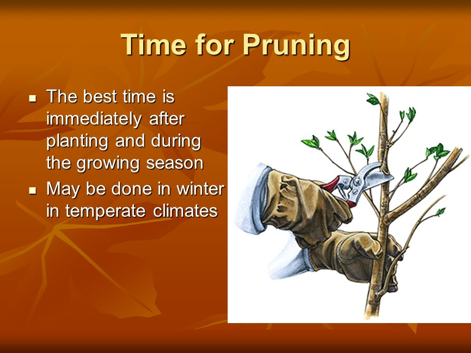 Time for Pruning The best time is immediately after planting and during the growing season.