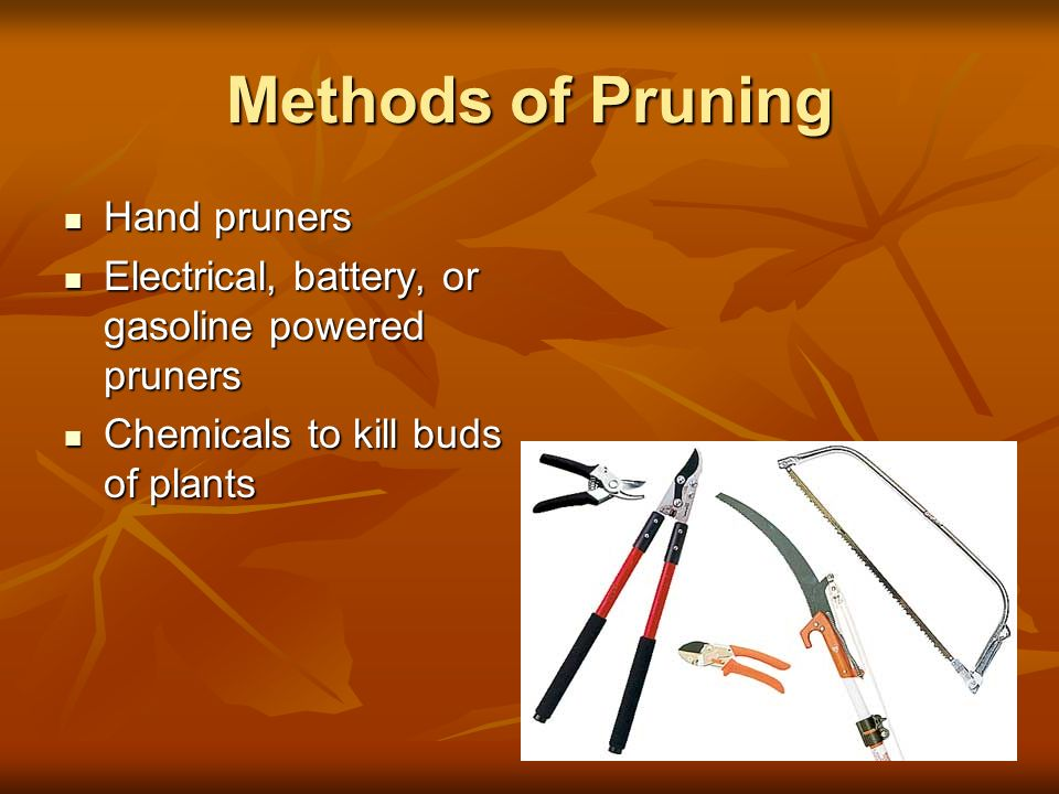 Methods of Pruning Hand pruners