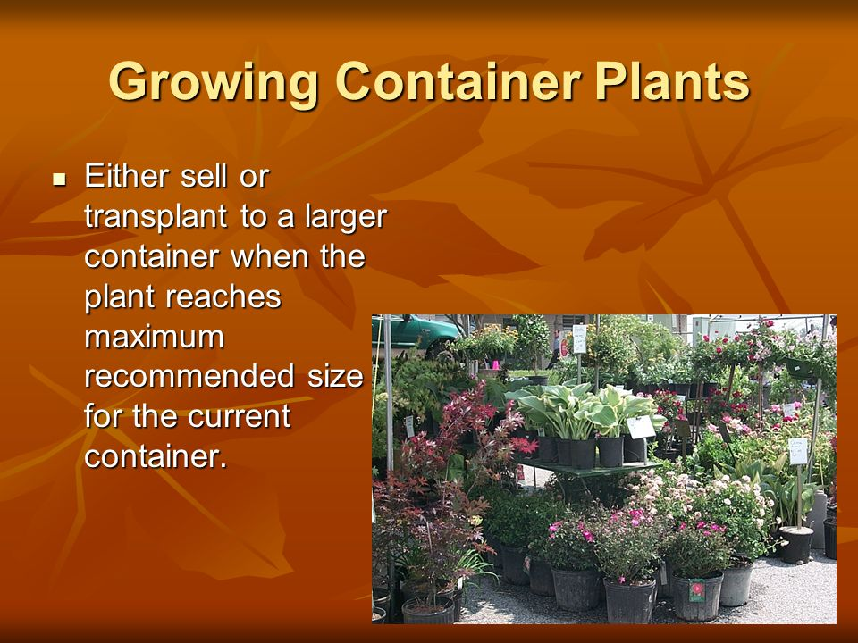 Growing Container Plants