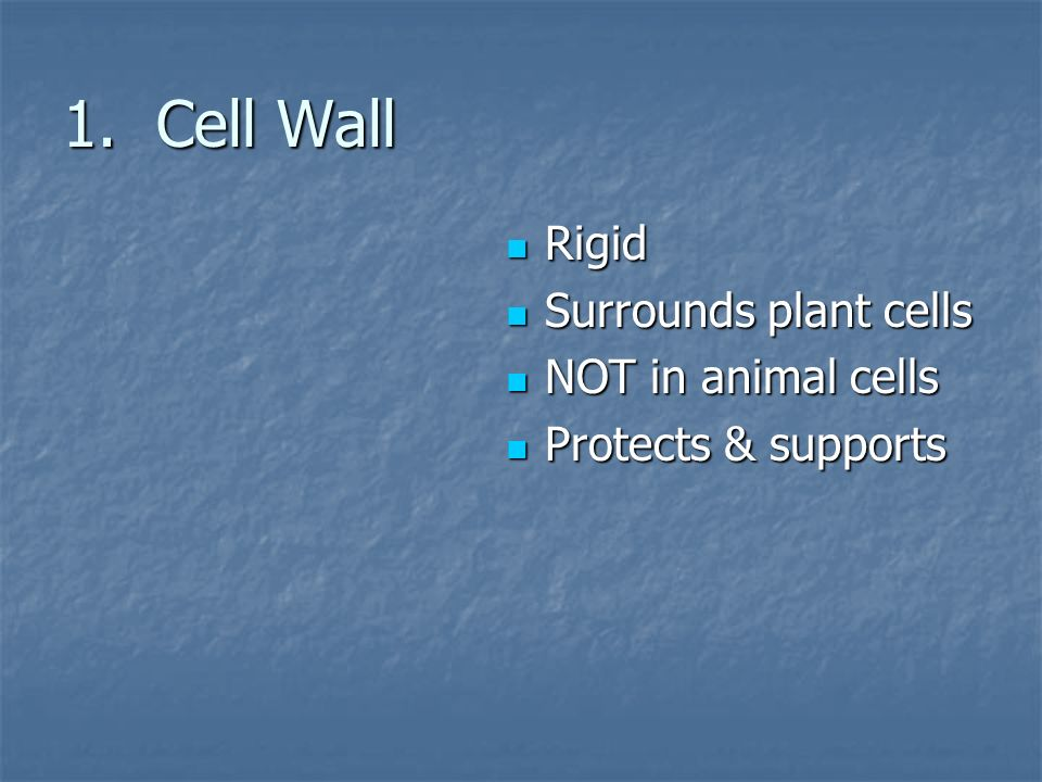 1. Cell Wall Rigid Surrounds plant cells NOT in animal cells