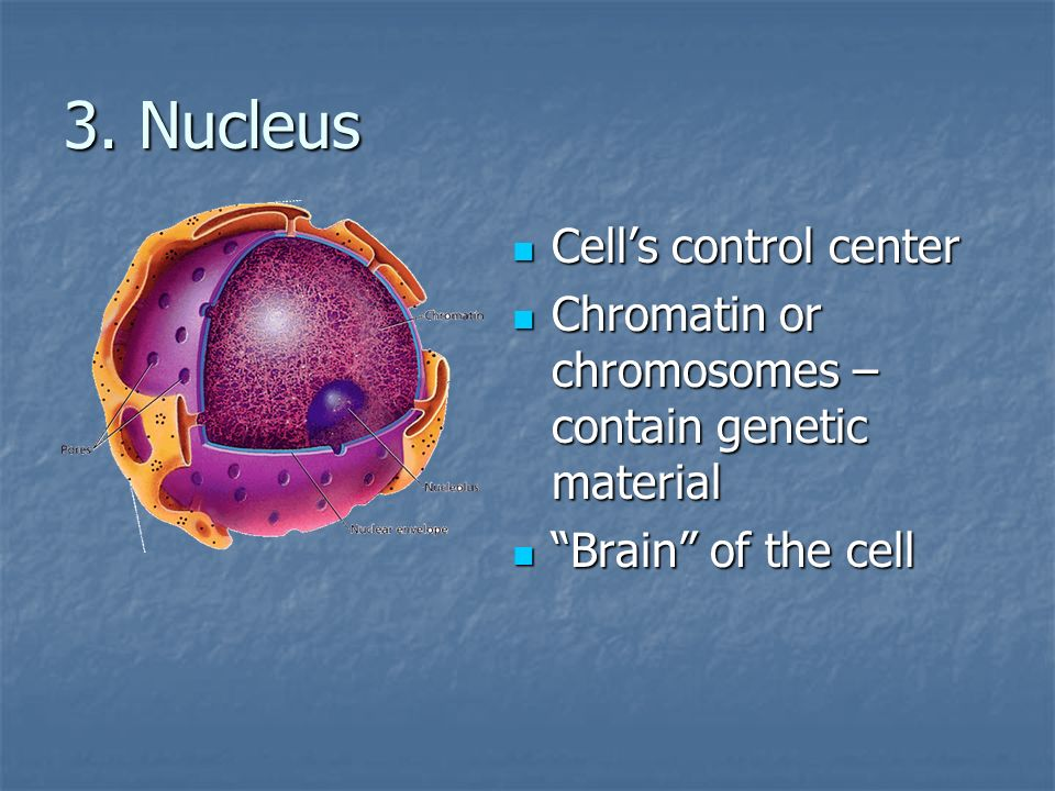 3. Nucleus Cell's control center