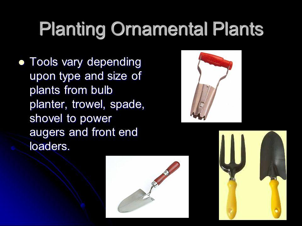 Planting Ornamental Plants