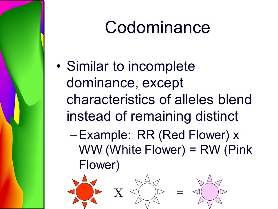 Codominance Similar to incomplete dominance, except characteristics of alleles blend instead of remaining distinct.