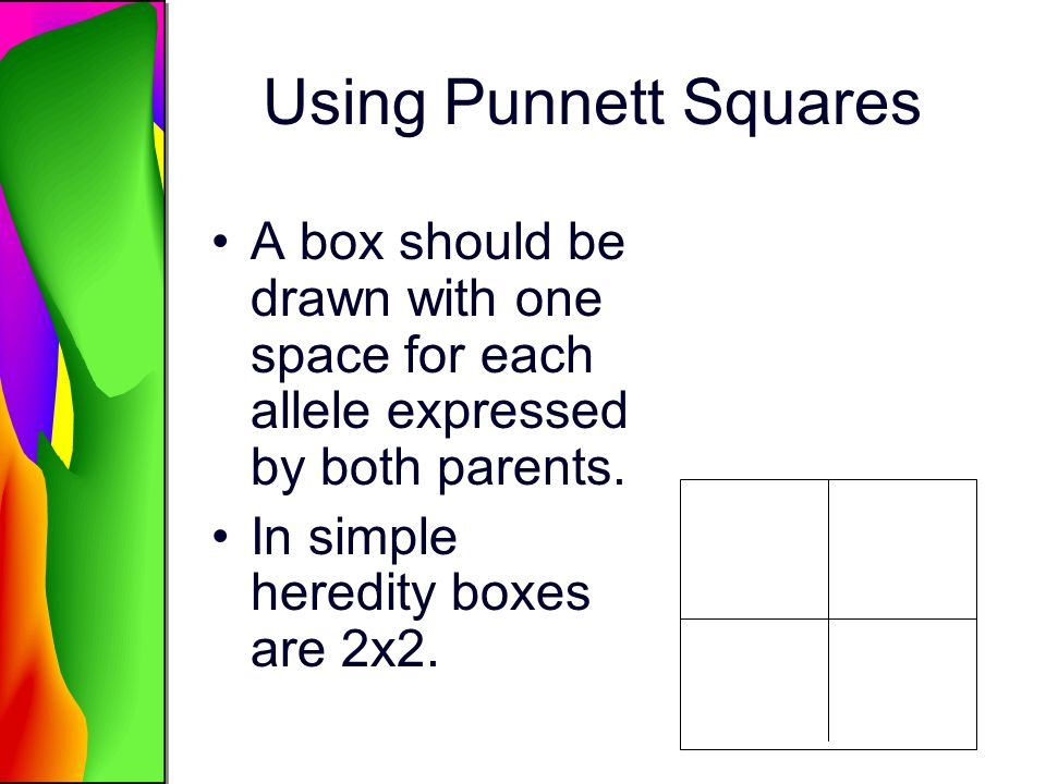 Using Punnett Squares A box should be drawn with one space for each allele expressed by both parents.
