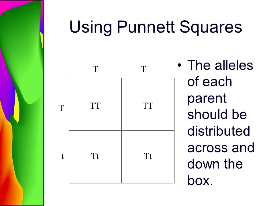 Using Punnett Squares The alleles of each parent should be distributed across and down the box. T.