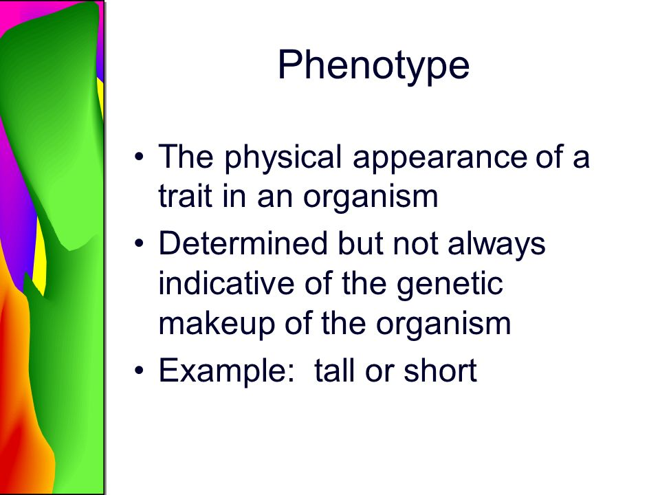 Phenotype The physical appearance of a trait in an organism