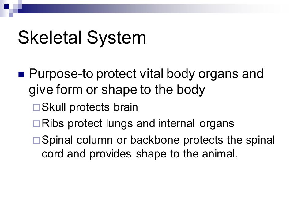Skeletal System Purpose-to protect vital body organs and give form or shape to the body. Skull protects brain.