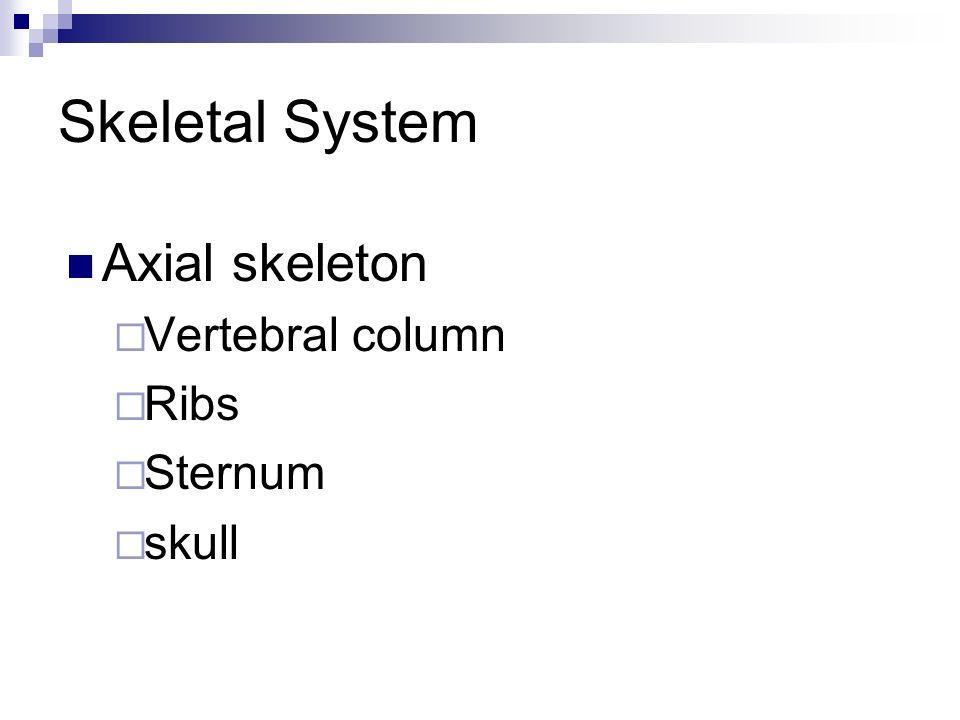 Skeletal System Axial skeleton Vertebral column Ribs Sternum skull