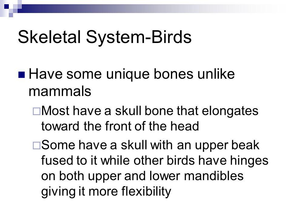 Skeletal System-Birds