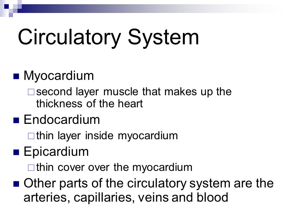 Circulatory System Myocardium Endocardium Epicardium