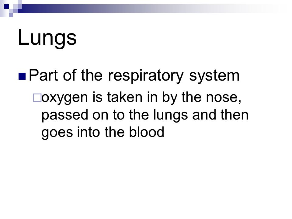 Lungs Part of the respiratory system