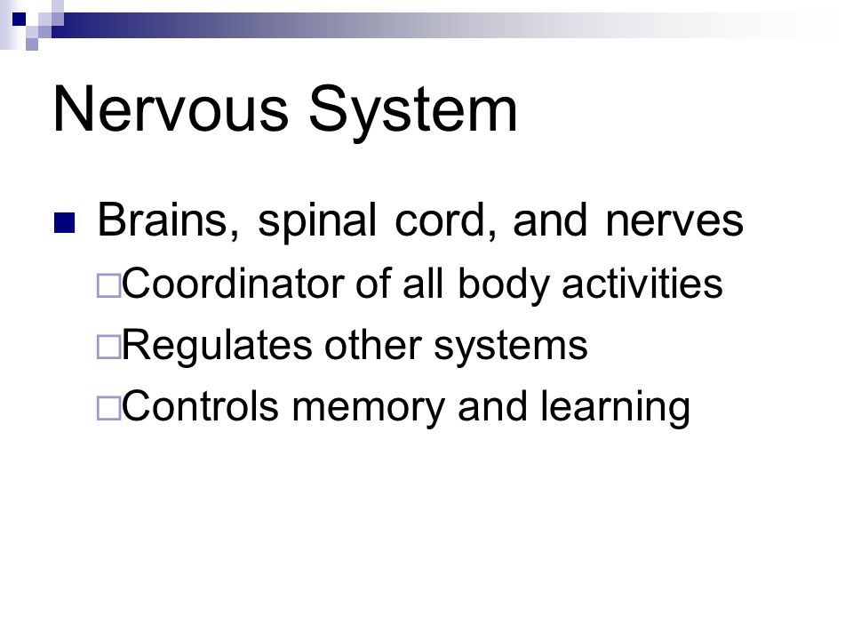 Nervous System Brains, spinal cord, and nerves