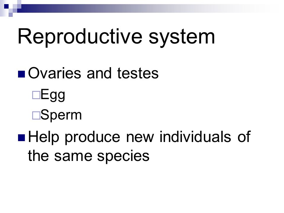 Reproductive system Ovaries and testes