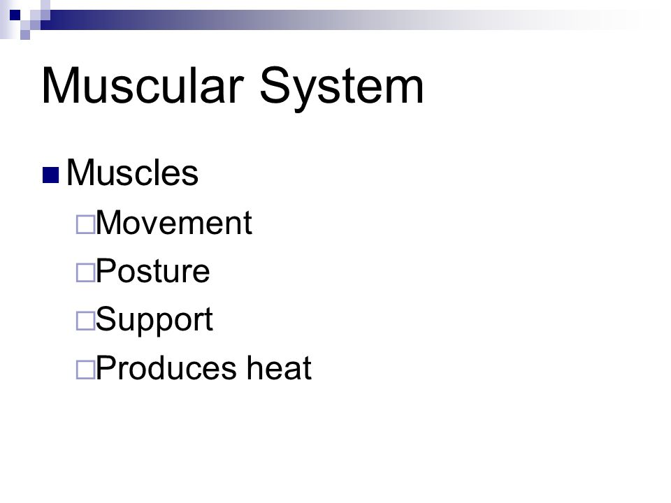 Muscular System Muscles Movement Posture Support Produces heat