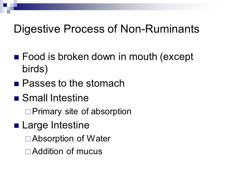 Digestive Process of Non-Ruminants