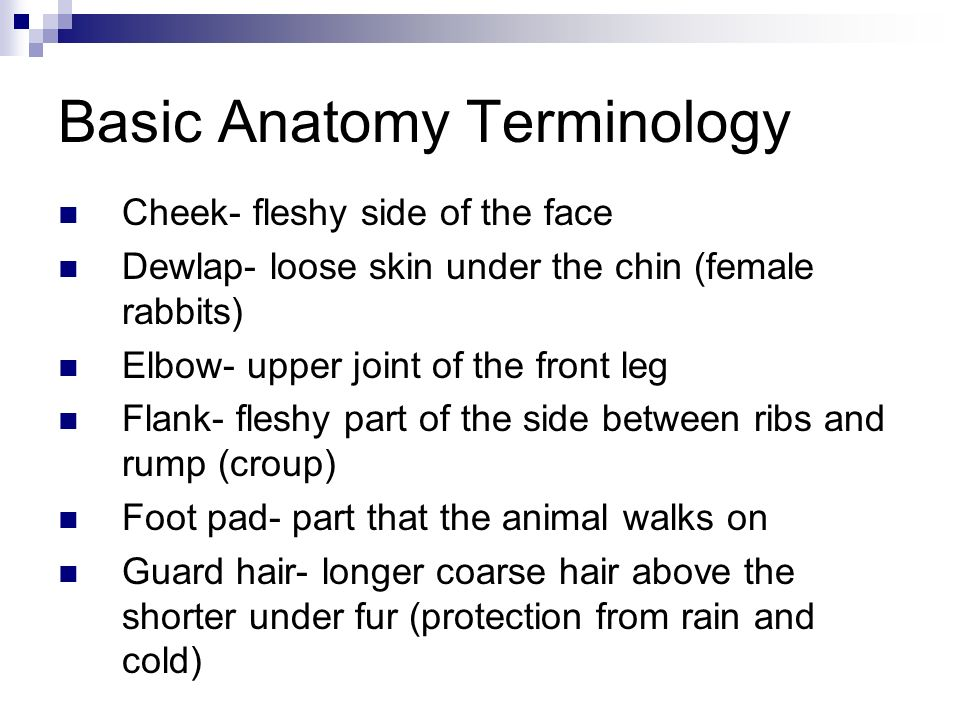 Basic Anatomy Terminology