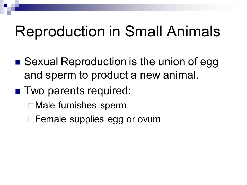Reproduction in Small Animals