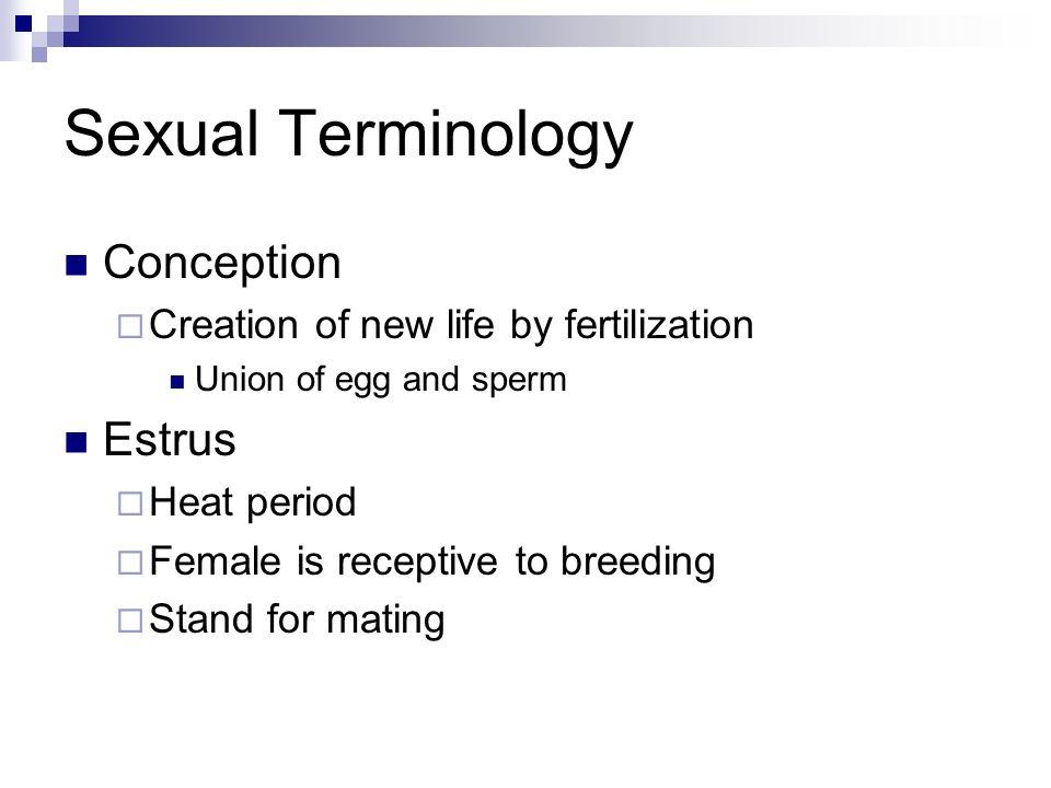 Sexual Terminology Conception Estrus
