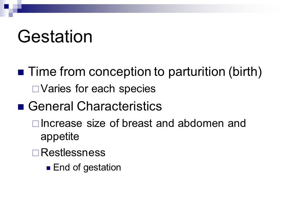 Gestation Time from conception to parturition (birth)