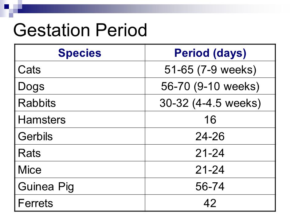 Gestation Period Species Period (days) Cats 51-65 (7-9 weeks) Dogs