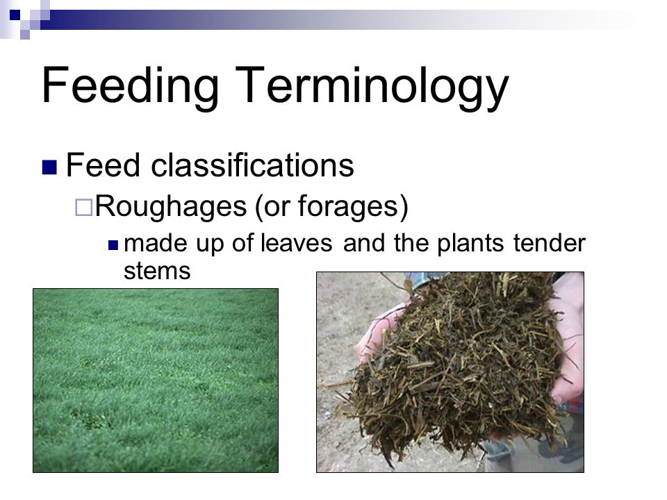 Feeding Terminology Feed classifications Roughages (or forages)