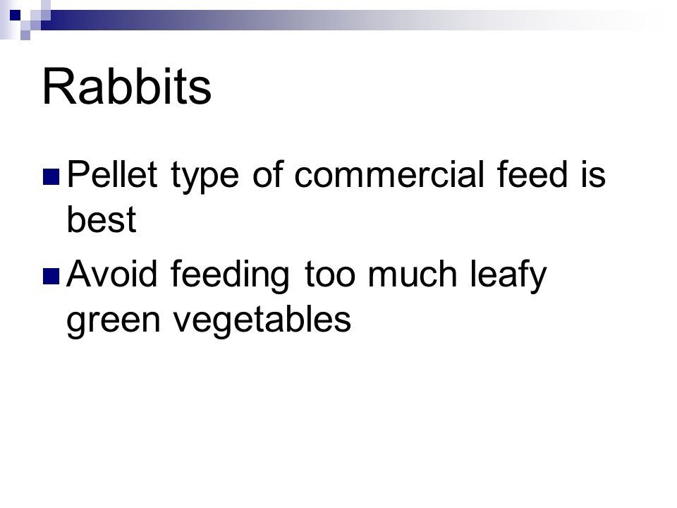 Rabbits Pellet type of commercial feed is best