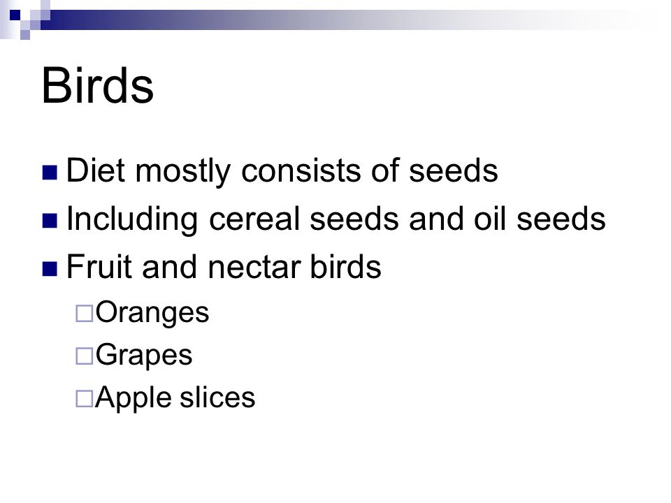 Birds Diet mostly consists of seeds