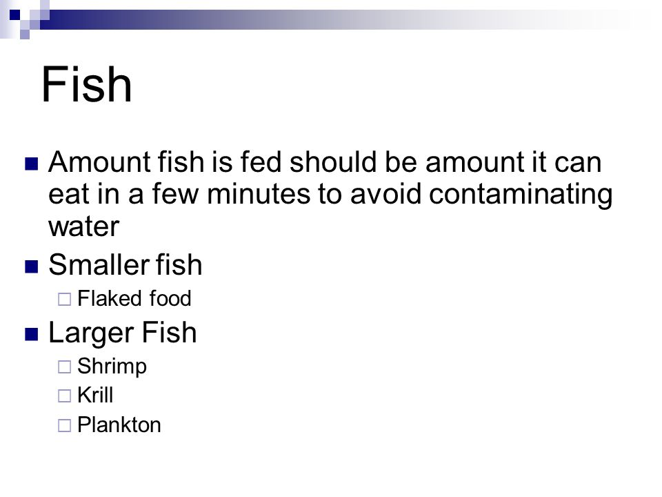 FishAmount fish is fed should be amount it can eat in a few minutes to avoid contaminating water. Smaller fish.