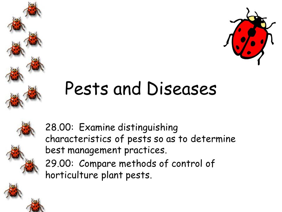 Pests and Diseases 28.00: Examine distinguishing characteristics of pests so as to determine best management practices.