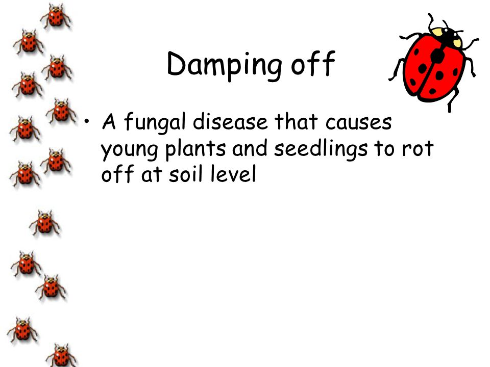 Damping off A fungal disease that causes young plants and seedlings to rot off at soil level