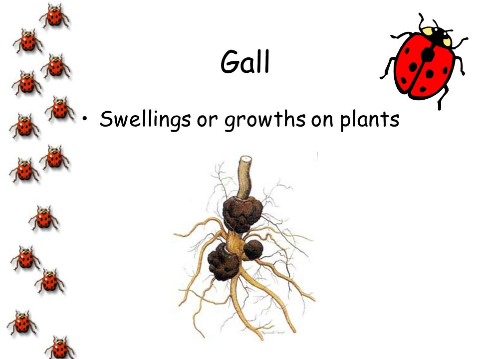 Gall Swellings or growths on plants