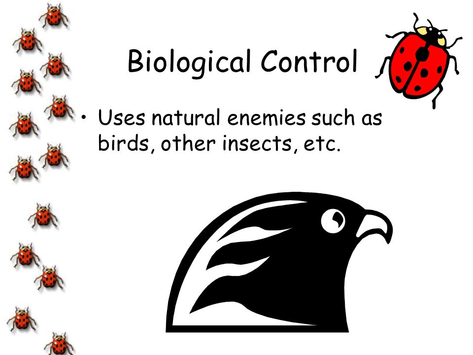 Biological Control Uses natural enemies such as birds, other insects, etc.